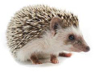 hedgehog principle